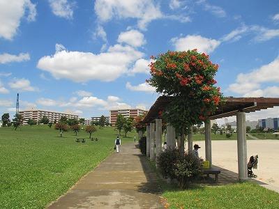 ふるさとの辺公園IMG_1074.jpg