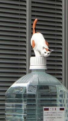 勝どき猫DSC00320.jpg