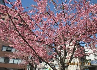 南桜公園IMG_3523.JPG