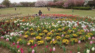 東村山中央公園DSC01898.jpg