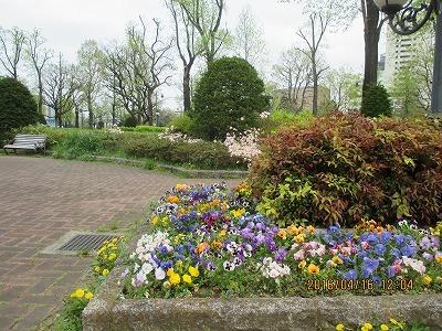 若葉東公園IMG_2173.jpg