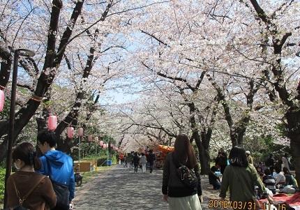 辰巳桜IMG_8078.JPG