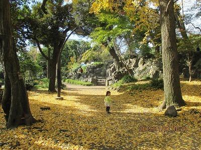銀杏の道IMG_1660.jpg