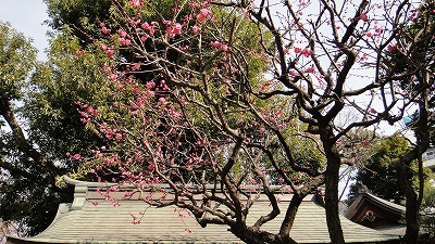 鳩森神社DSC01323.jpg